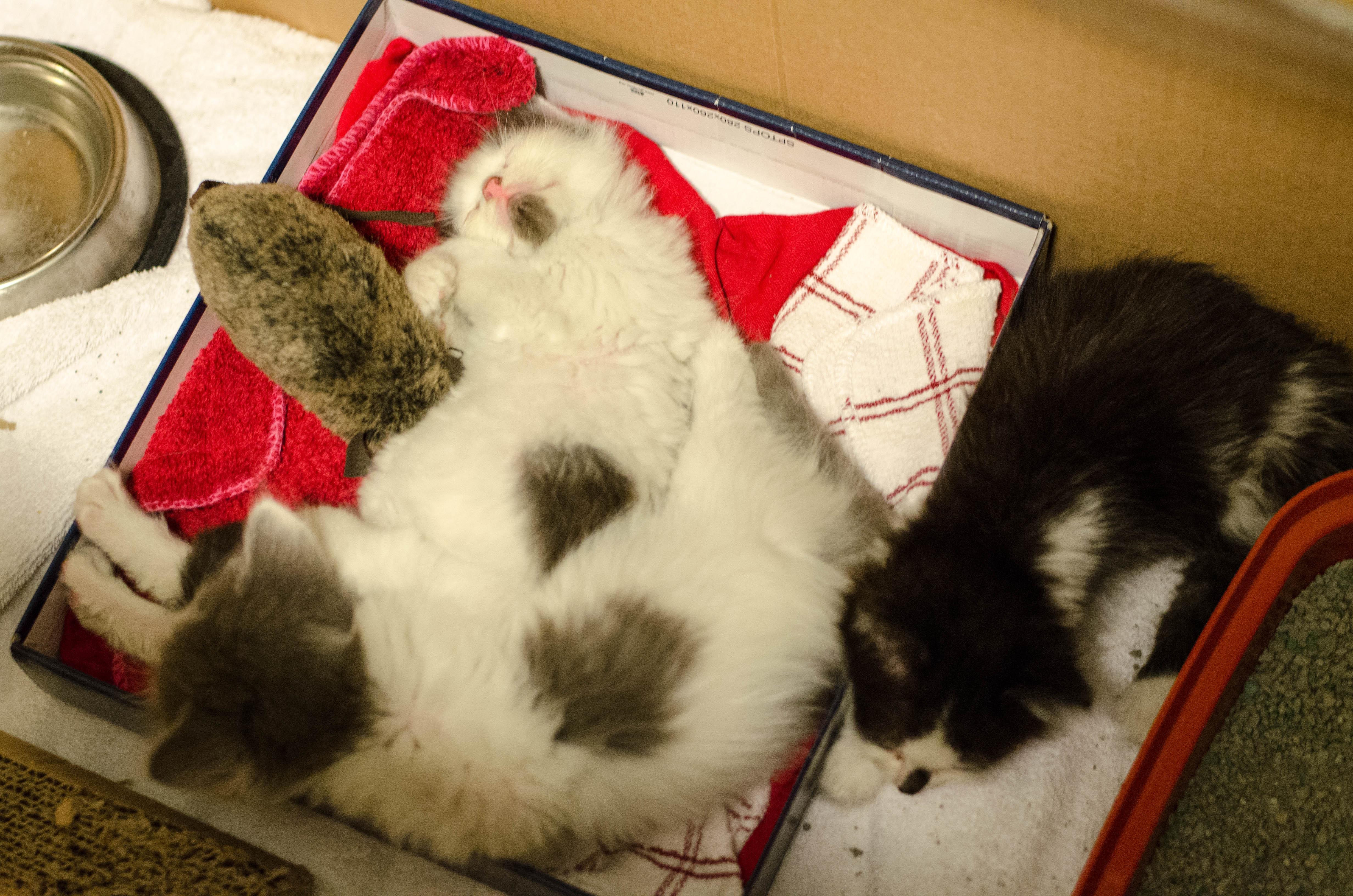 kittens-8